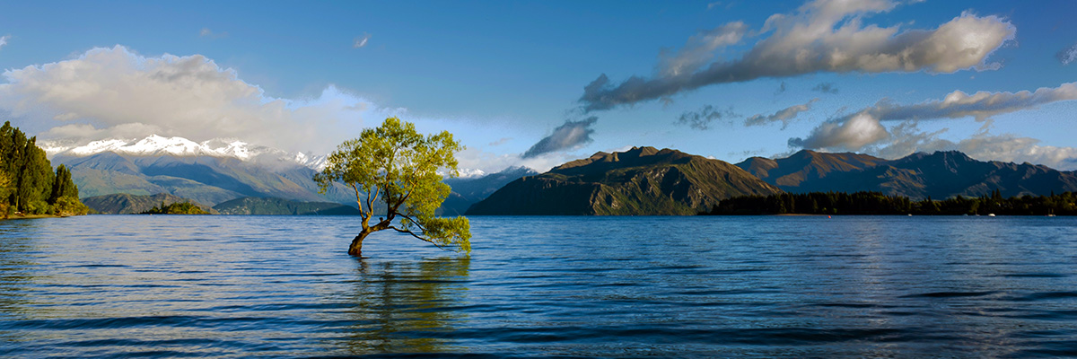 Tree in lake with mountains in background